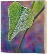 Smilax Wood Print