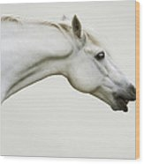 Smiling Grey Pony Wood Print by Ethiriel  Photography