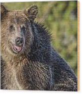 Smiling Grizzly Wood Print