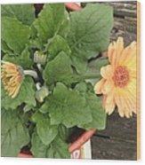 Smiling Orange Zerbera Flower Wood Print