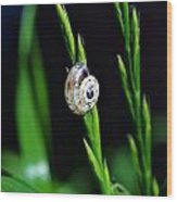 Snail On Green Grass Wood Print