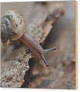 Snail's Tale Wood Print