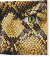 Snake Eye Wood Print by Semmick Photo