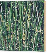Snake Grass On The Beach Wood Print