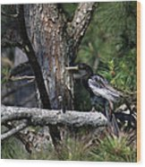 Snakebird At The Rookery Wood Print