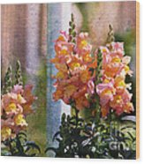 Snapdragons Wood Print