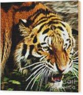 Snarling Tiger Wood Print