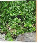 Sneaky Green Wood Print