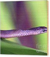 Sneaky Snake...... Wood Print