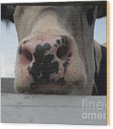 Sniffing Cow Wood Print
