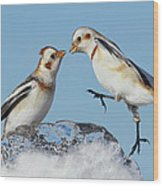 Snow Buntings And Ice Wood Print