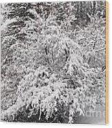 Snow Bush Wood Print