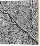 Snow Covered Branches Wood Print