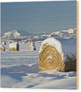 Snow-covered Hay Bales Okotoks Wood Print by Michael Interisano