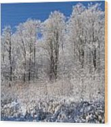 Snow Covered Maple Trees Iron Hill Wood Print