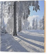 Snow Covered Path, Rennsteig, Grosser Inselsberg, Brotterode, Thuringia, Germany Wood Print