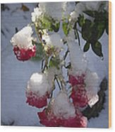 Snow Covered Roses Wood Print