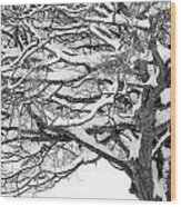 Snow Covered Tree Branches Wood Print