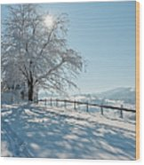 Snow Covered Tree With Sun Shining Through It Wood Print by © Peter Boehi