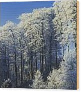 Snow Covered Trees In A Forest, County Wood Print