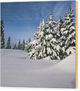 Snow Covered Trees In The Oregon Wood Print by Natural Selection Craig Tuttle