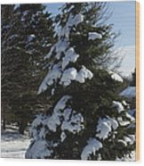 Snow Crusted Evergreen Wood Print
