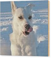Snow Dog 0249 Wood Print