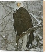 Snow Eagle Wood Print