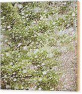 Snow Falling In Front Of Pines Wood Print