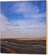 Snow Geese At Rest Wood Print