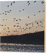 Snow Geese At Sunrise Wood Print