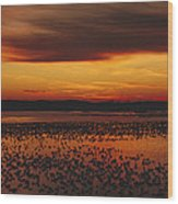 Snow Geese Come To Rest In Squaw Creek Wood Print