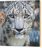 Snow Leopards Stare Wood Print