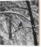 Snow On Beak Wood Print