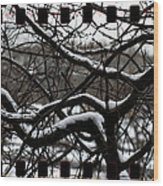 Snow On Branches Wood Print