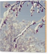 Snow On Spring Blossom Branches Wood Print