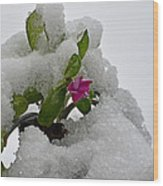 Snow On The Flowers Wood Print