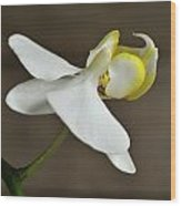 Snow Orchid Wood Print
