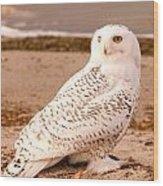 Snow Owl3 Wood Print
