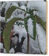 Snow Plant Wood Print