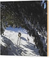 Snow Trail-under The Boughs Wood Print