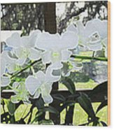 Snow White Orchid On The Water Accented Fx  Wood Print