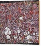 Snowberries And Rosehips Wood Print