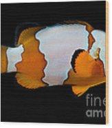 Snowflake Clownfish Wood Print