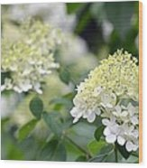 Snowflake Hydrangea 2 Wood Print