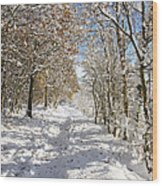 Snowpath Wood Print