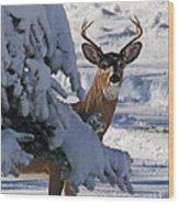 Snowy Buck Wood Print