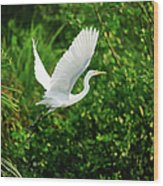 Snowy Egret Bird Wood Print by Shahnewaz Karim