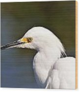 Snowy Egret Close Up Wood Print