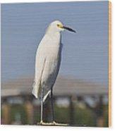 Snowy Egret Stare Down Wood Print